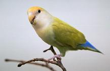 Parasites in Birds | VCA Animal Hospital