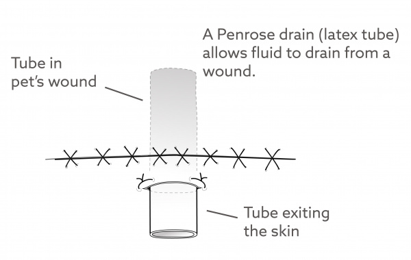 Penrose Drain Discharge Instructions for Dogs | VCA Animal Hospital