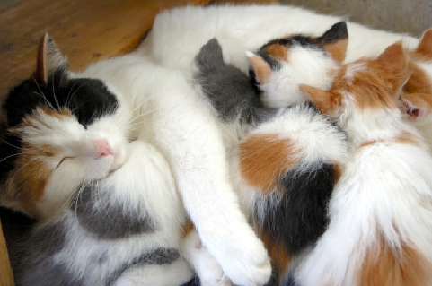 Pregnancy And Parturition In Cats Vca Animal Hospital