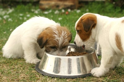 puppy__handling_and_food_bowl_exercises_2