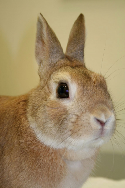 rabbits health husbandry disease health husbandry and diseases