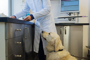 Serum Electrolytes | VCA Animal Hospital