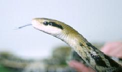 Snakes - Feeding | VCA Animal Hospital