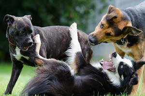 social-groups-with-dogs