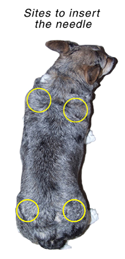 pics How to Administer Subcutaneous Fluids to a Dog