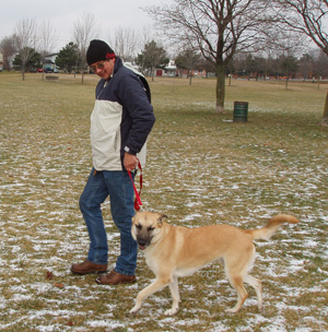 Controlling Pulling on Walks | VCA Animal Hospital
