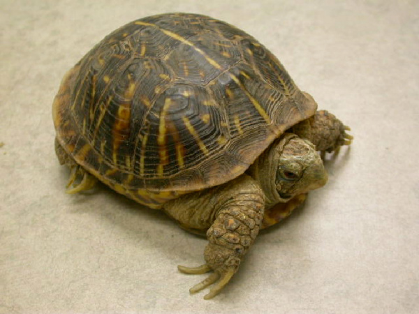 Turtles Box Owning Vca Animal Hospital