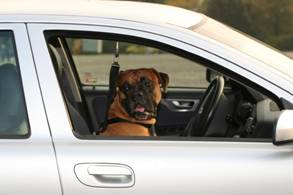 how to stop dog car sickness