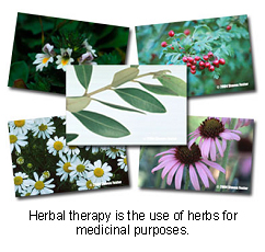 veterinary_herbal_therapy-1