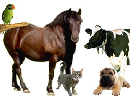 Veterinary Homeopathy   VCA Animal Hospital