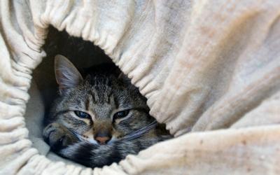 vitamin a toxicosis in cats  vca animal hospital