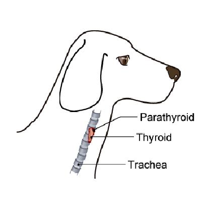 wellness testing for senior dogs