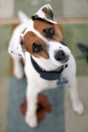 Why Dogs Tilt Their Heads Vca Animal Hospital