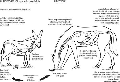 Deworming in Horses | VCA Animal Hospital