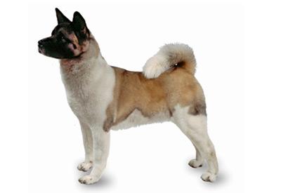 dog breed landing