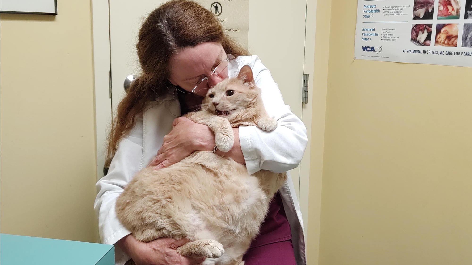 VCA Voice: Metro Cat Hospital extends life of 37 pound cat