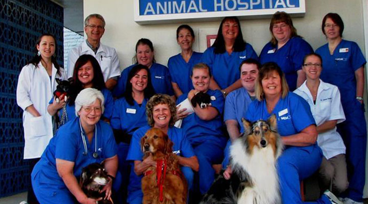 Homepage Team Picture of VCA 12 Mile Animal Hospital