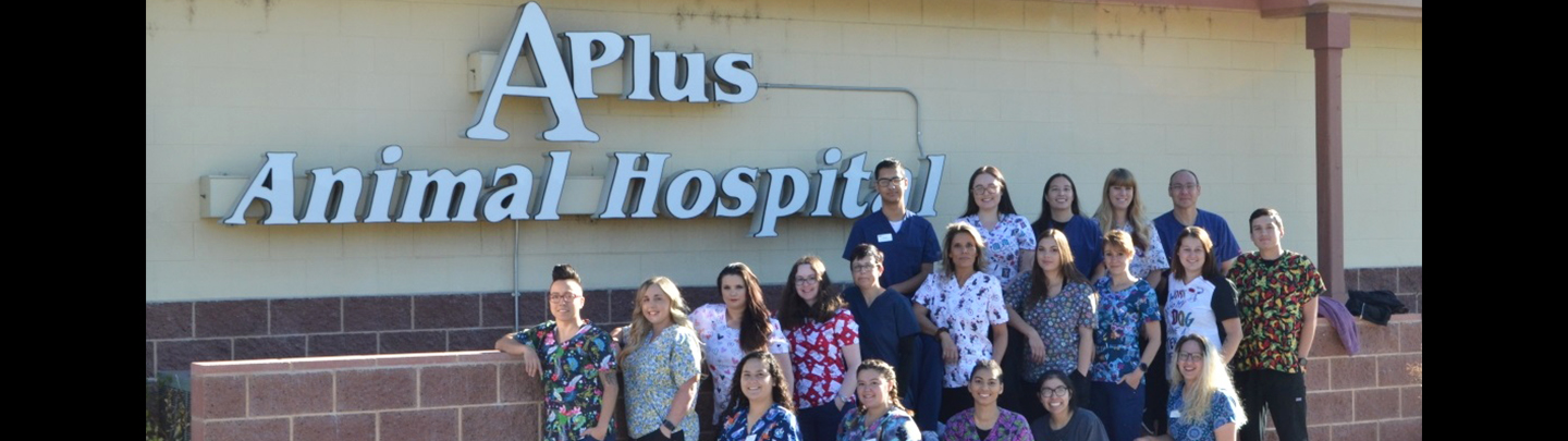 Team Picture of VCA A Plus Animal Hospital