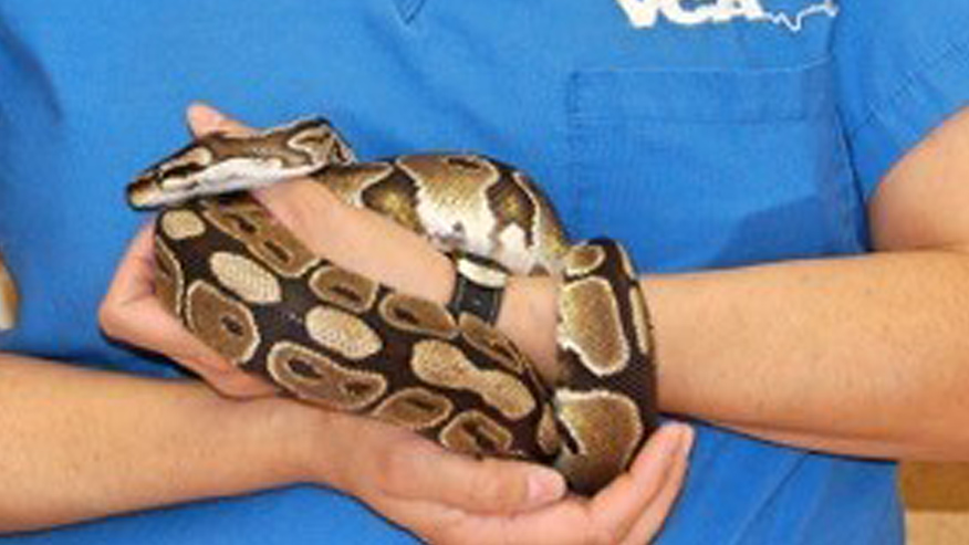 VCA Adler Animal Hospital Exotic Animal Care