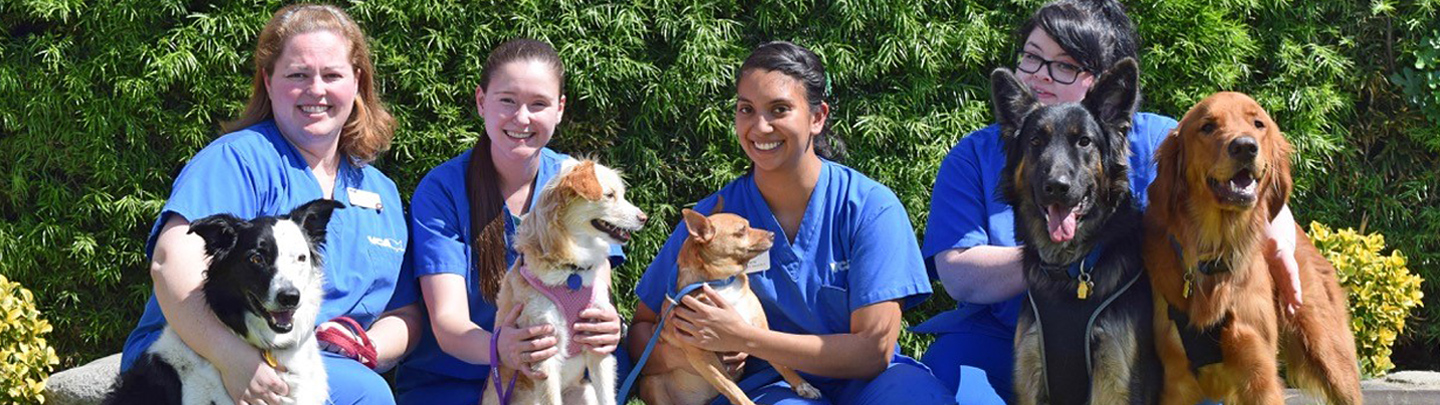 VCA Adler Animal Hospital Hours & Information