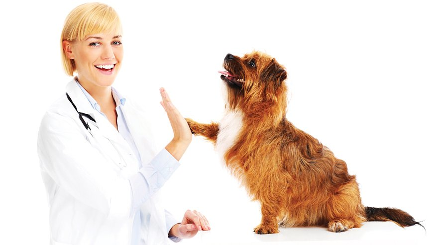 VCA Advanced Care Animal Hospital Preventive Care