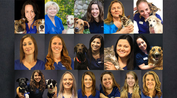 Homepage Team Picture of VCA Advanced Care Animal Hospital