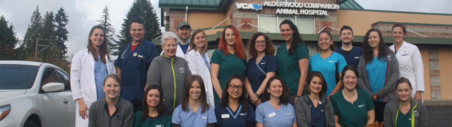 Team Picture of VCA Alderwood Companion Animal Hospital