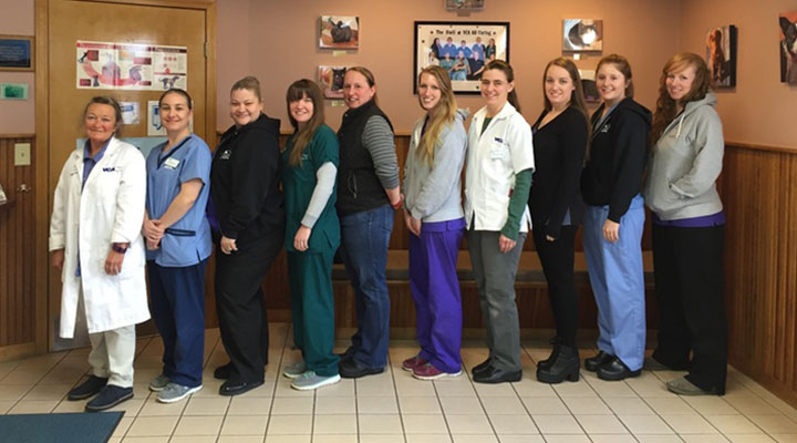 Homepage Team Picture of VCA All Caring Animal Hospital