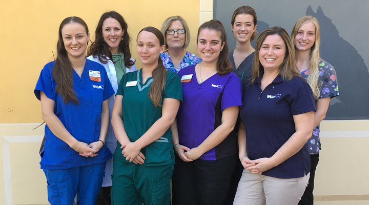Homepage Team Picture of VCA All Our Pets Animal Hospital