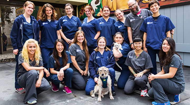 VCA All Pets Hospital in San Francisco, CA staff team photo