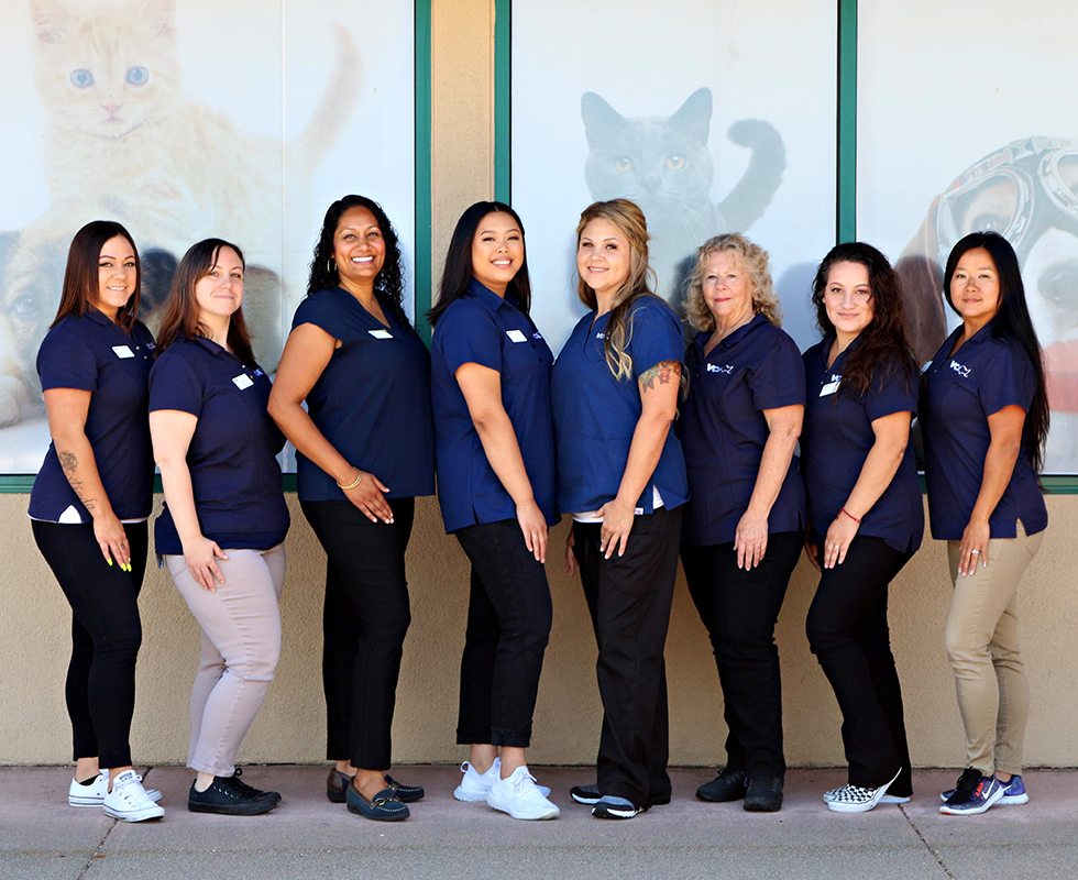 Client Services Staff at VCA Animal Care Clinic