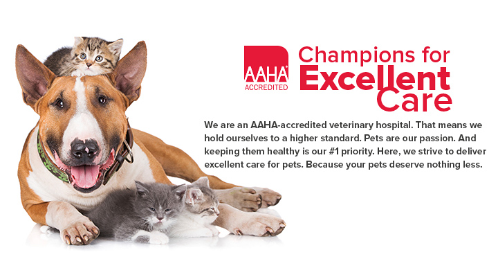VCA Champions for Care - Animal Care Hospital MN
