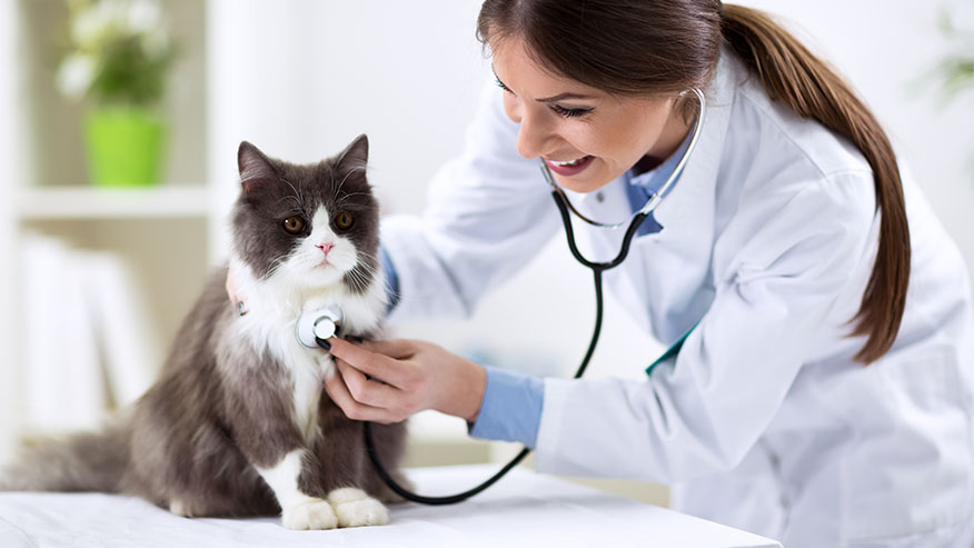 cat with veterinarian and otoscope