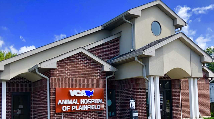 Veterinarians in Plainfield, IN | VCA Animal Hospital of
