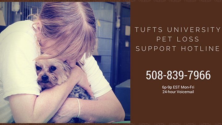 Tufts University Pet Loss Support Line