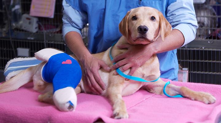 Veterinarians In Los Angeles Ca Vca Animal Specialty Group