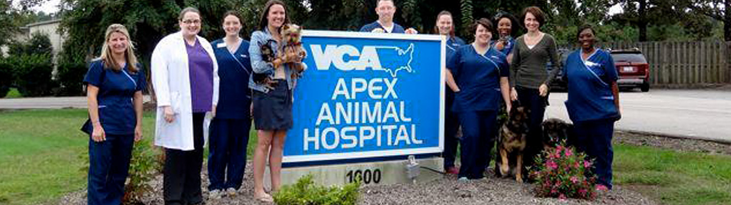 Team Picture of VCA Apex Animal Hospital