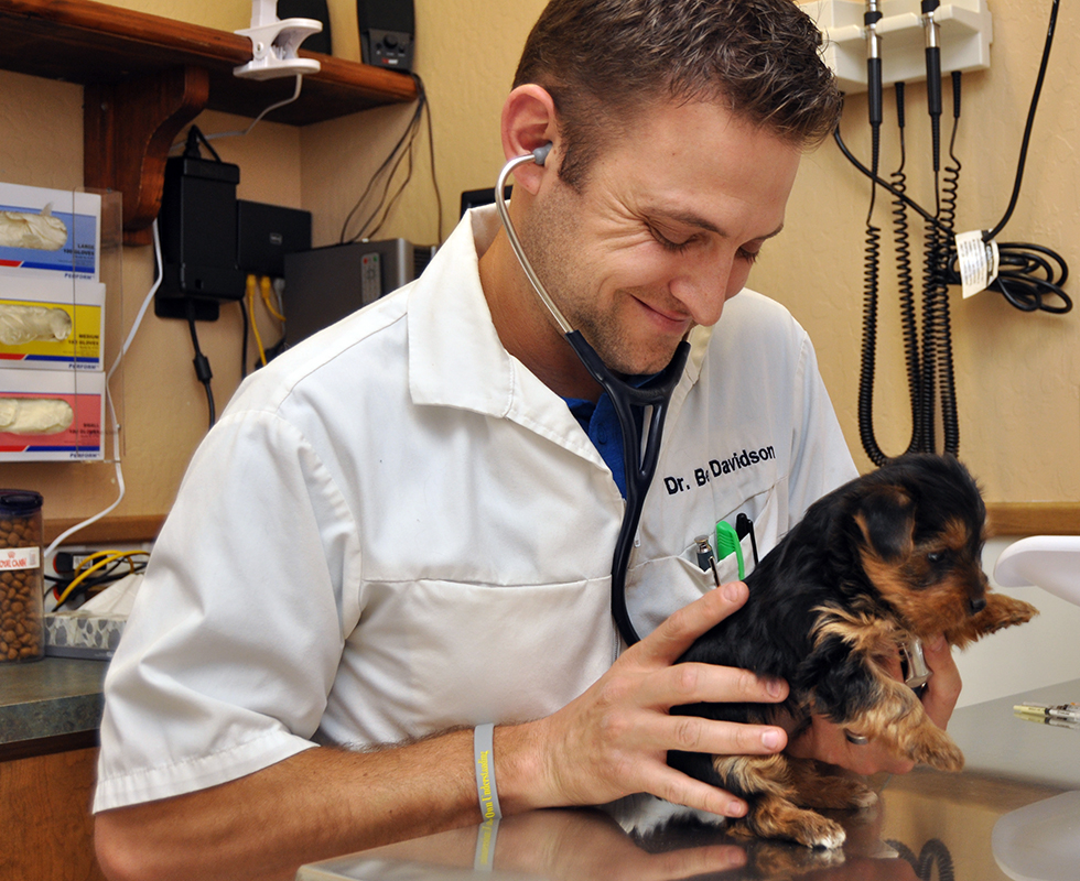 Veterinary Support Staff at VCA Baring Boulevard Animal Hospital