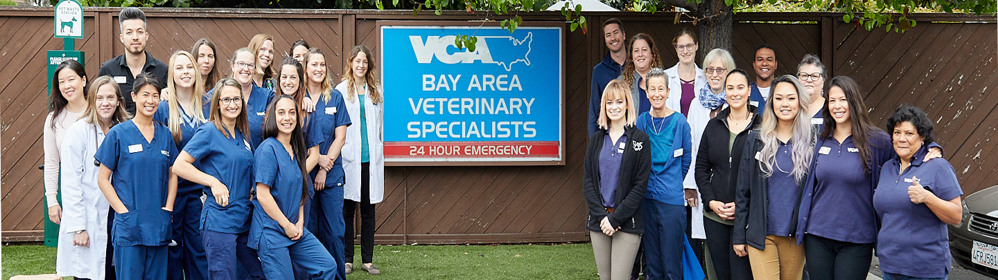 Our Team at Bay Area Specialists