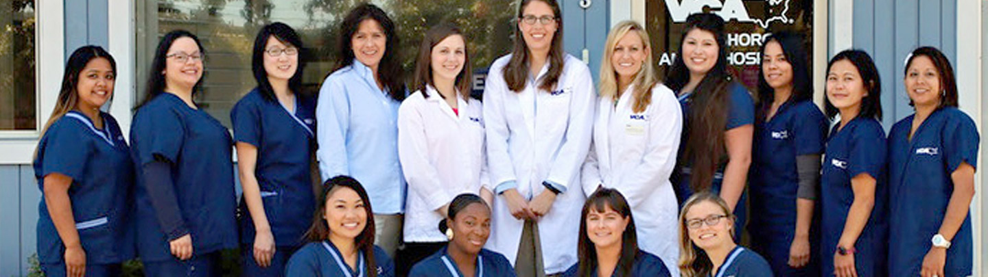 Team Picture of VCA Bayshore Animal Hospital