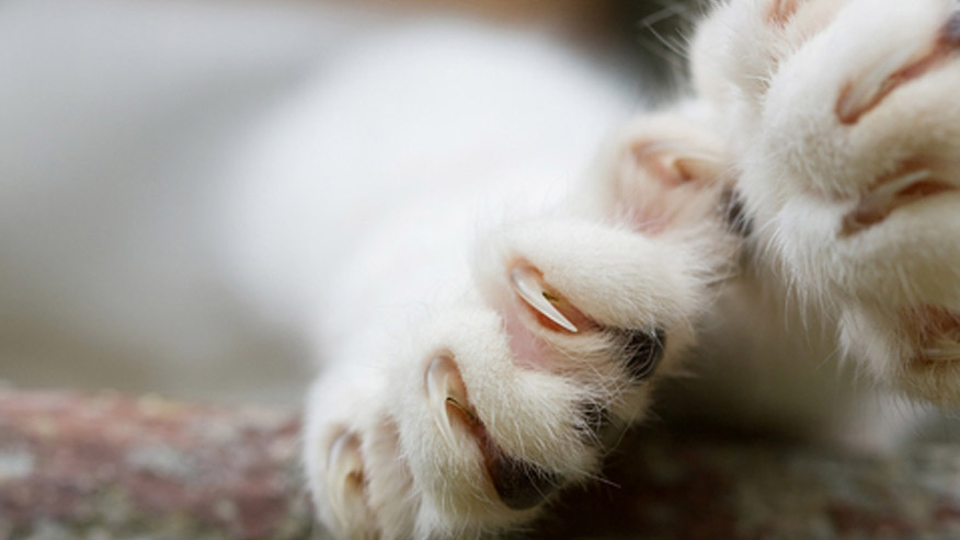 VCA Grooming Picture of Cat's Claws