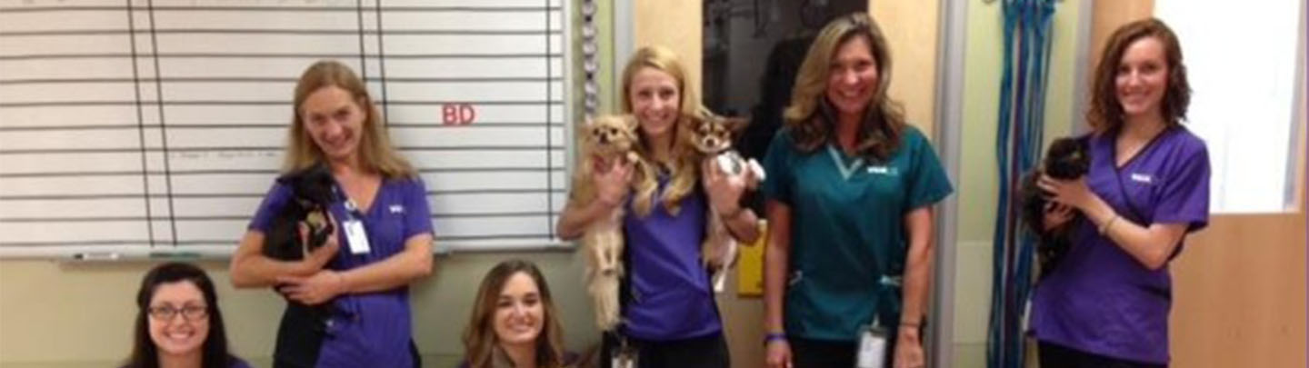 Team Picture of VCA Beech Grove Animal Hospital