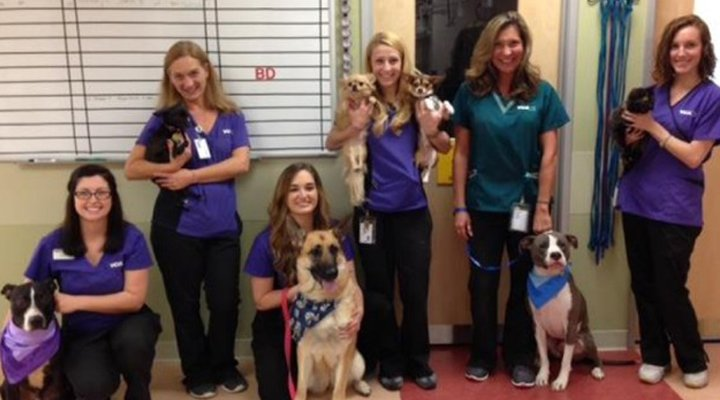 Homepage Team Picture of VCA Beech Grove Animal Hospital