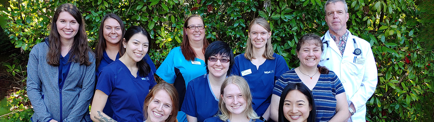 VCA Bellevue Animal Hospital Team