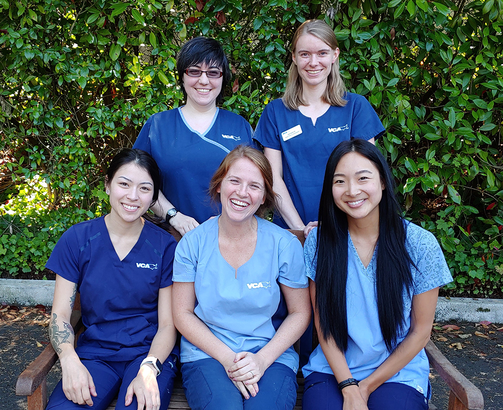 VCA Bellevue Animal Hospital Veterinary Support Staff