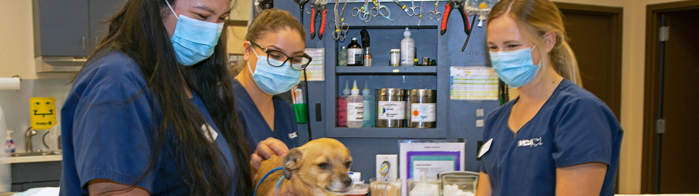 Services at VCA Ben White Animal Hospital