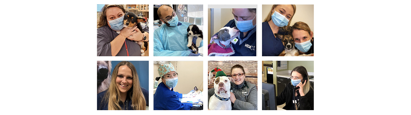 VCA Bolingbrook Animal Hospital - Our Team