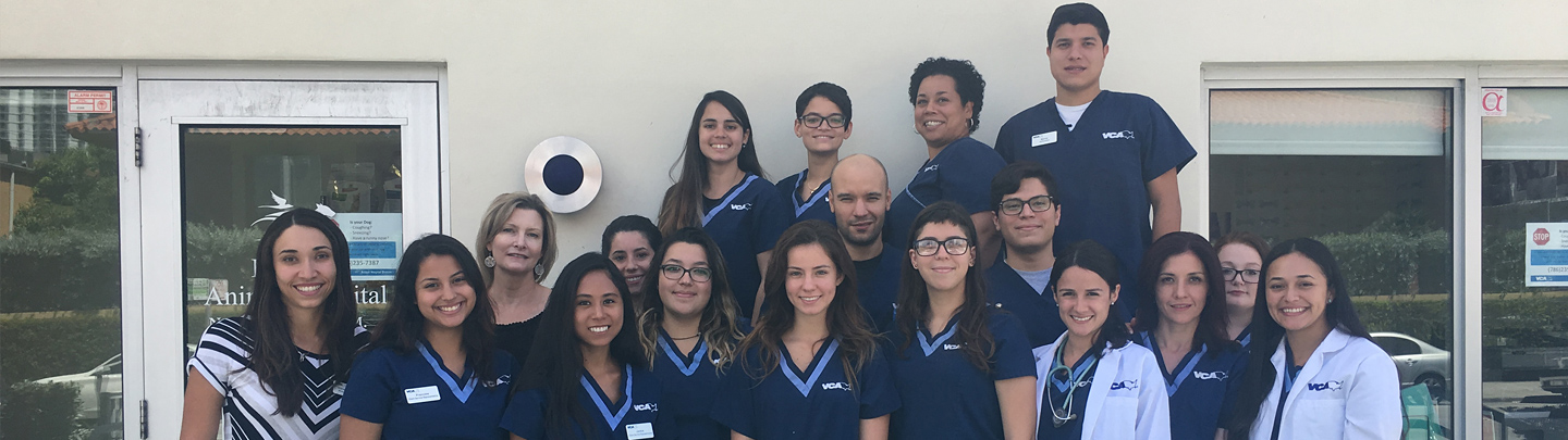 Team Picture of VCA Brickell Animal Hospital