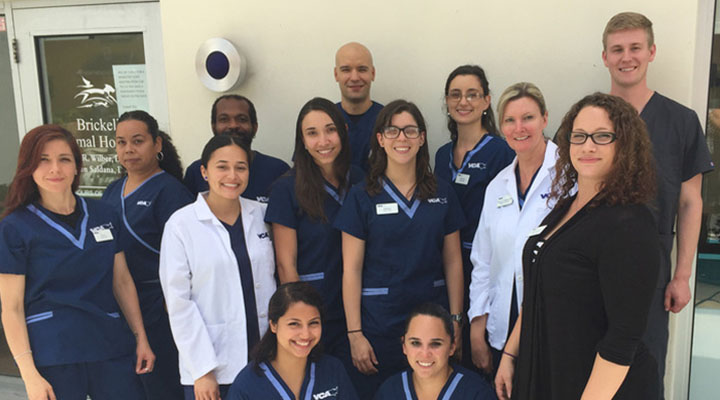 Homepage Team Picture of VCA Brickell Animal Hospital