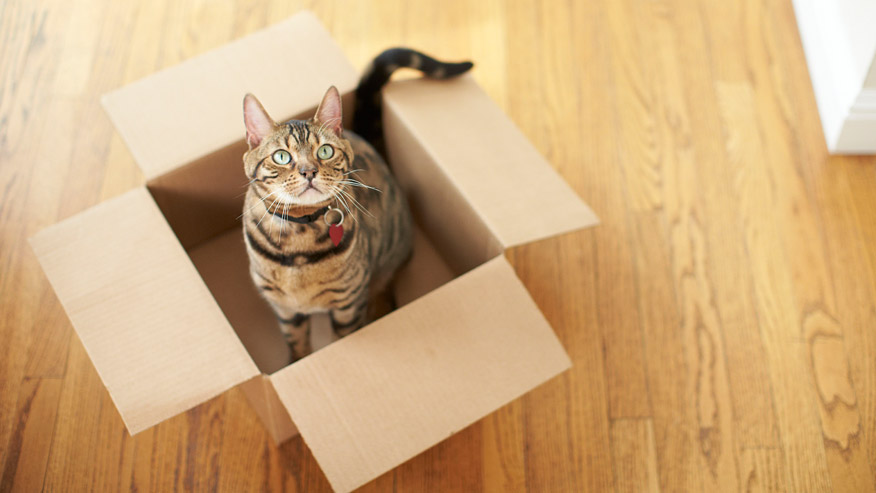 VCA Home Delivery Picture of a Cat sitting in an open cardboard Box